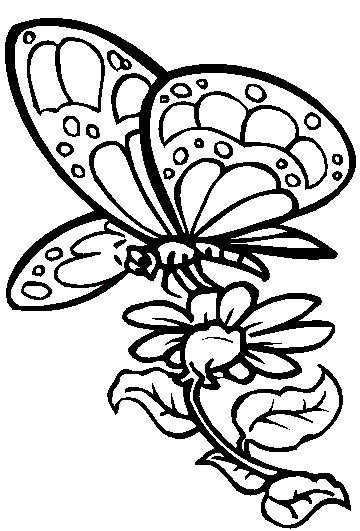 Butterfly Coloring Pages 3