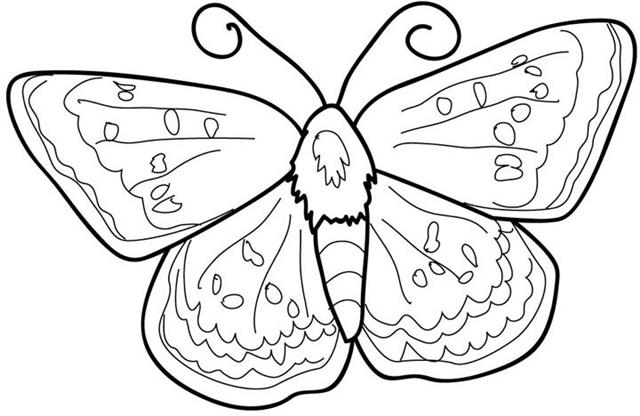 butterfly coloring pages 4