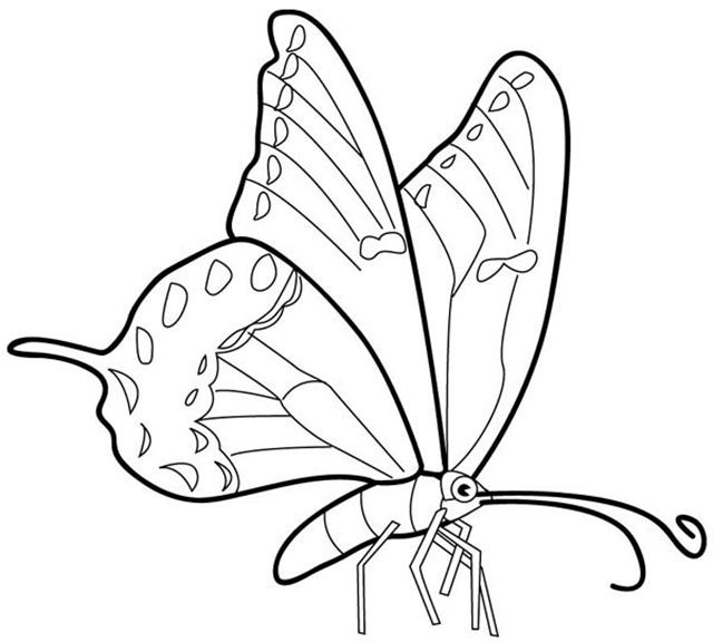 Coloring Butterfly 5