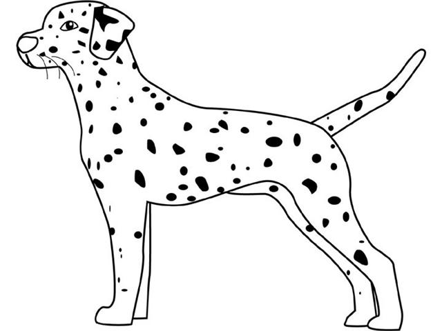 Dalmation Coloring Pages 4