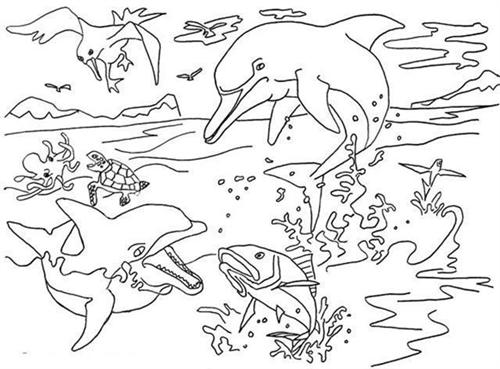 Dolphin Coloring Pages 12