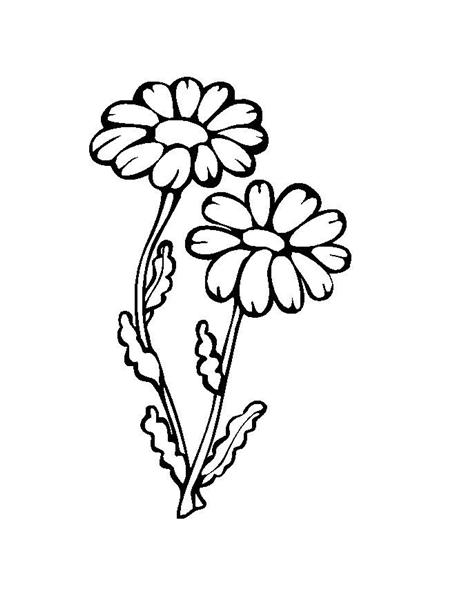 Printable Flower Coloring Pages 4