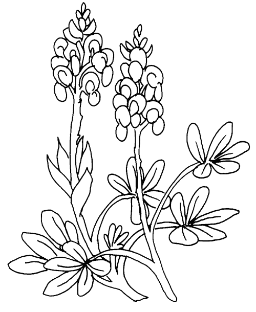 Printable Flower Coloring Pages 12