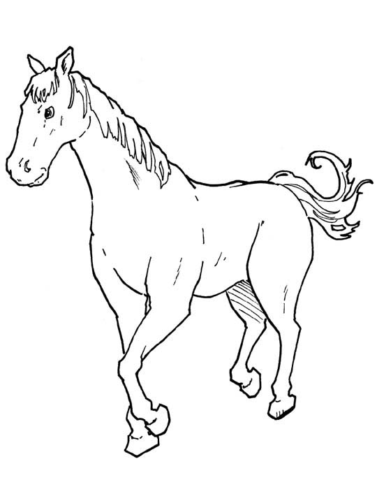 Horse Coloring Pages 6