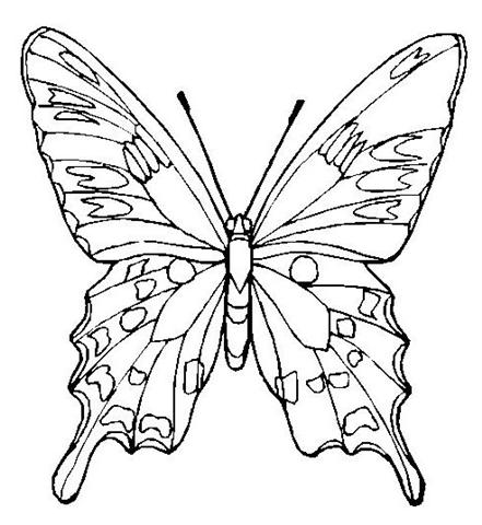 Coloring Butterfly 8