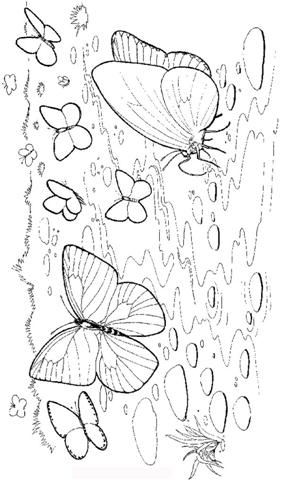 Butterfly Coloring Pages 1