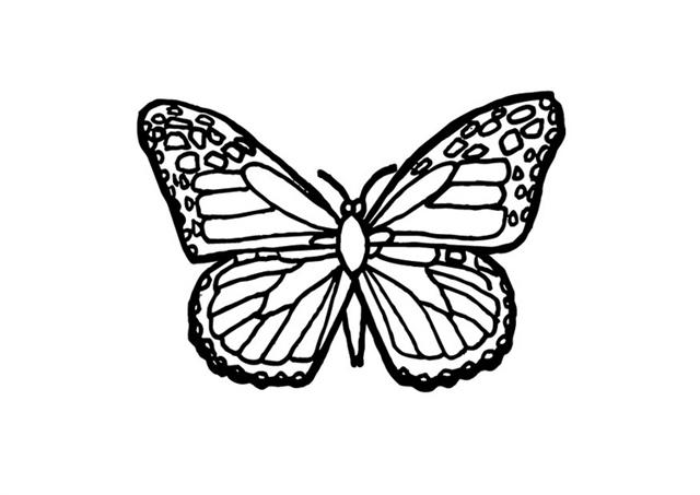 Butterfly Coloring Pages 12
