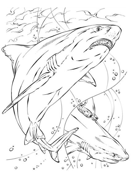 Shark Coloring Pages 5